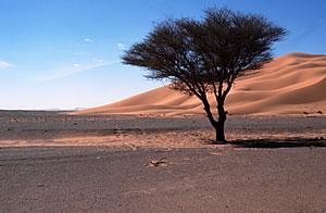 deserto_clima300